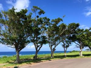 沖縄 青い海